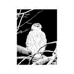 Impression Obsession Cling Stamp - Night Owl 16416-CLG